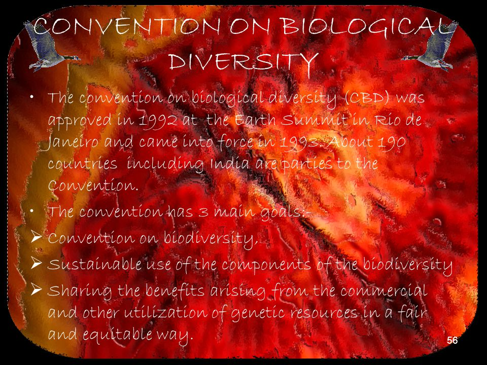 56 CONVENTION ON BIOLOGICAL DIVERSITY The convention on biological diversity (CBD) was approved in 1992 at the Earth Summit in Rio de Janeiro and came