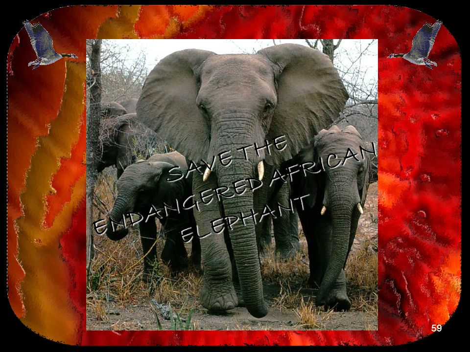 59 SAVE THE ENDANGERED AFRICAN ELEPHANT