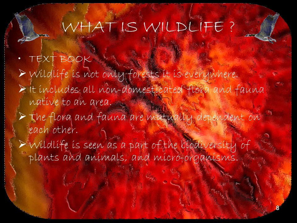 8 WHAT IS WILDLIFE ? TEXT BOOK  Wildlife is not only forests it is everywhere.  It includes all non-domesticated flora and fauna native to an area.