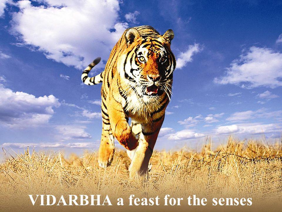 VIDARBHA a feast for the senses