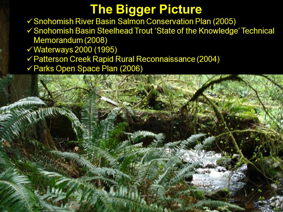 The Bigger Picture Snohomish River Basin Salmon Conservation Plan (2005) Snohomish Basin Steelhead Trout 'State of the Knowledge' Technical Memorandum (2008) Waterways 2000 (1995) Patterson Creek Rapid Rural Reconnaissance (2004) Parks Open Space Plan (2006)