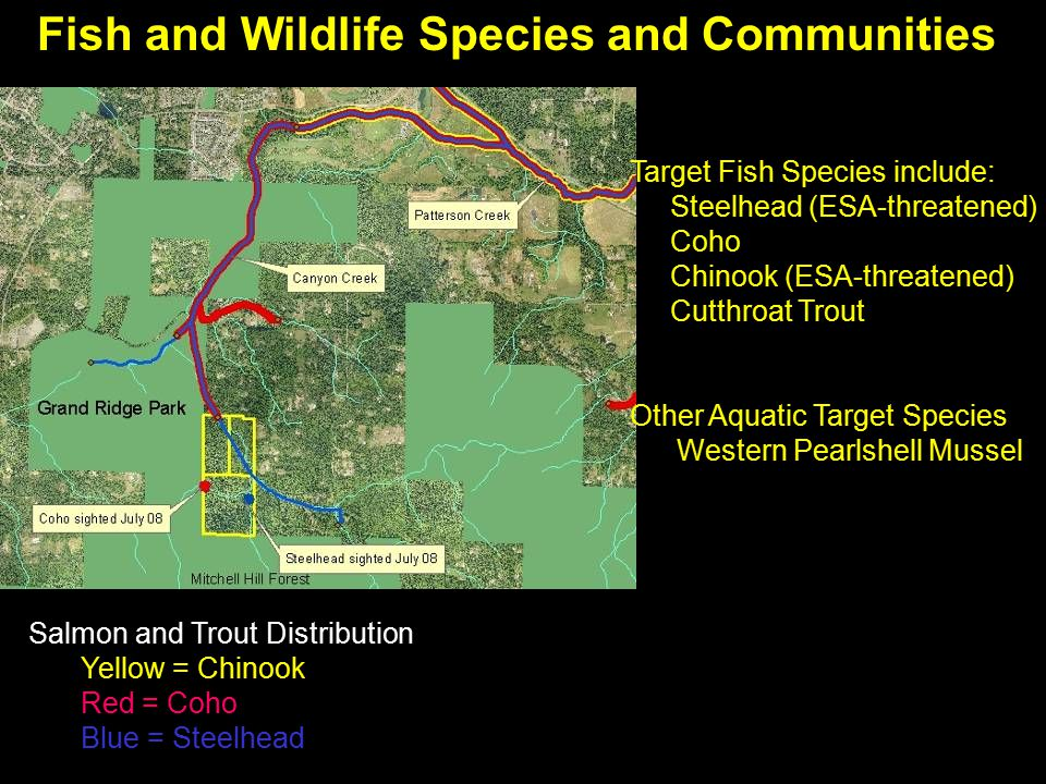 Fish and Wildlife Species and Communities Target Fish Species include: Steelhead (ESA-threatened) Coho Chinook (ESA-threatened) Cutthroat Trout Other Aquatic Target Species Western Pearlshell Mussel Salmon and Trout Distribution Yellow = Chinook Red = Coho Blue = Steelhead