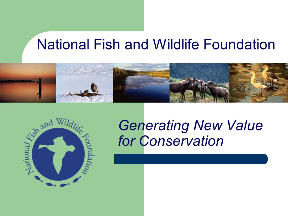 National Fish and Wildlife Foundation Generating New Value for Conservation
