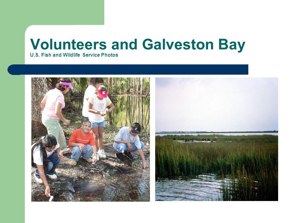 Volunteers and Galveston Bay U.S. Fish and Wildlife Service Photos