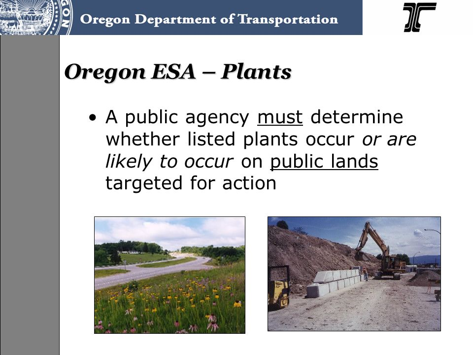 Oregon ESA – Plants A public agency must determine whether listed plants occur or are likely to occur on public lands targeted for action