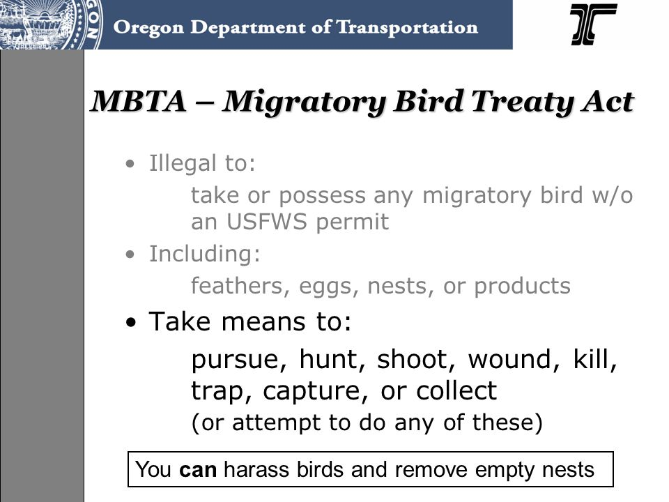 MBTA – Migratory Bird Treaty Act Illegal to: take or possess any migratory bird w/o an USFWS permit Including: feathers, eggs, nests, or products Take
