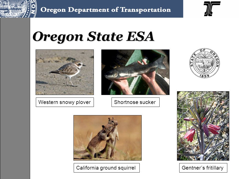 Oregon State ESA Shortnose suckerWestern snowy plover California ground squirrelGentner's fritillary