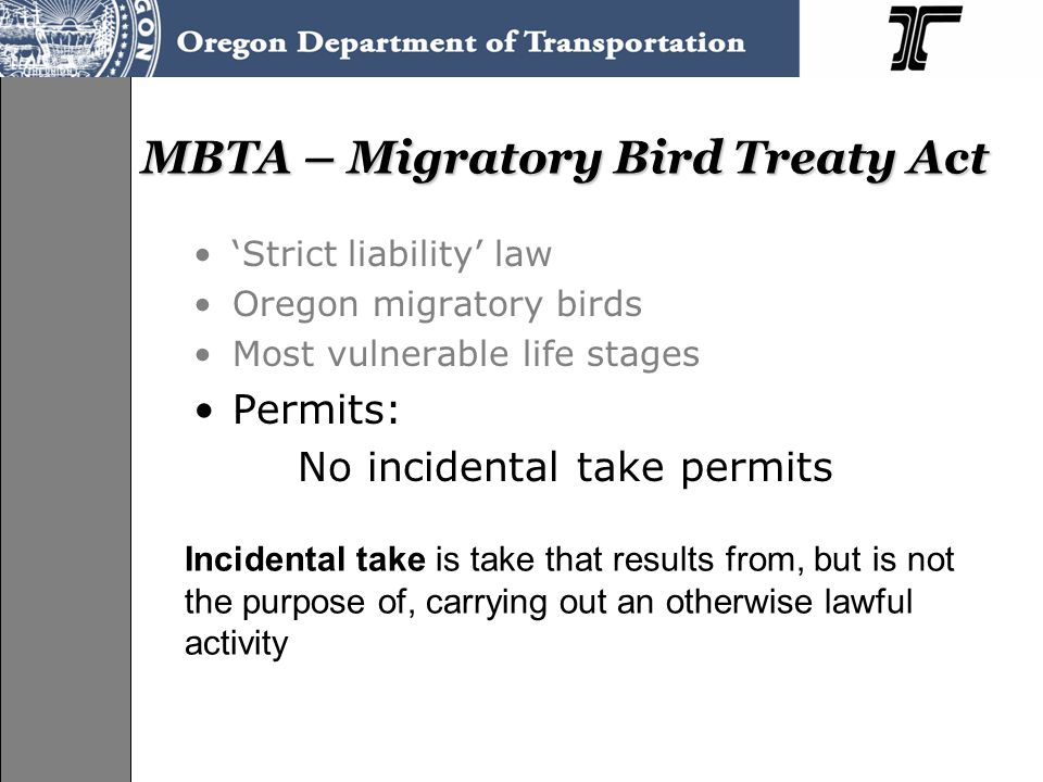 MBTA – Migratory Bird Treaty Act 'Strict liability' law Oregon migratory birds Most vulnerable life stages Permits: No incidental take permits Incidental take is take that results from, but is not the purpose of, carrying out an otherwise lawful activity