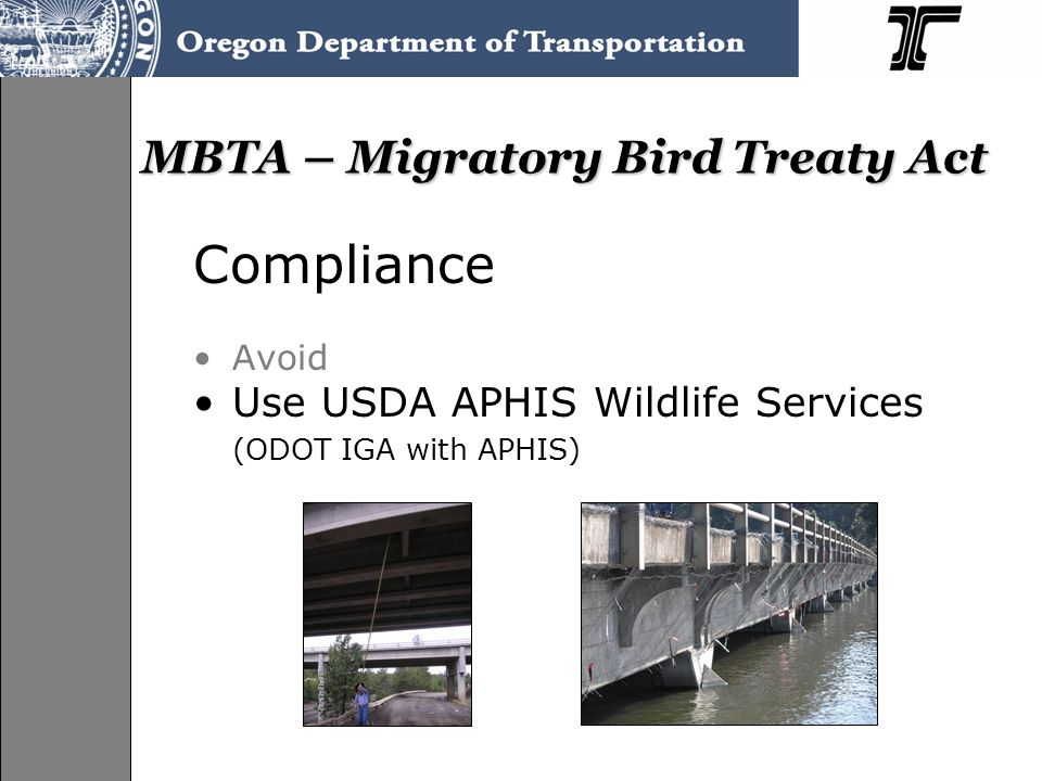 MBTA – Migratory Bird Treaty Act Compliance Avoid Use USDA APHIS Wildlife Services (ODOT IGA with APHIS)