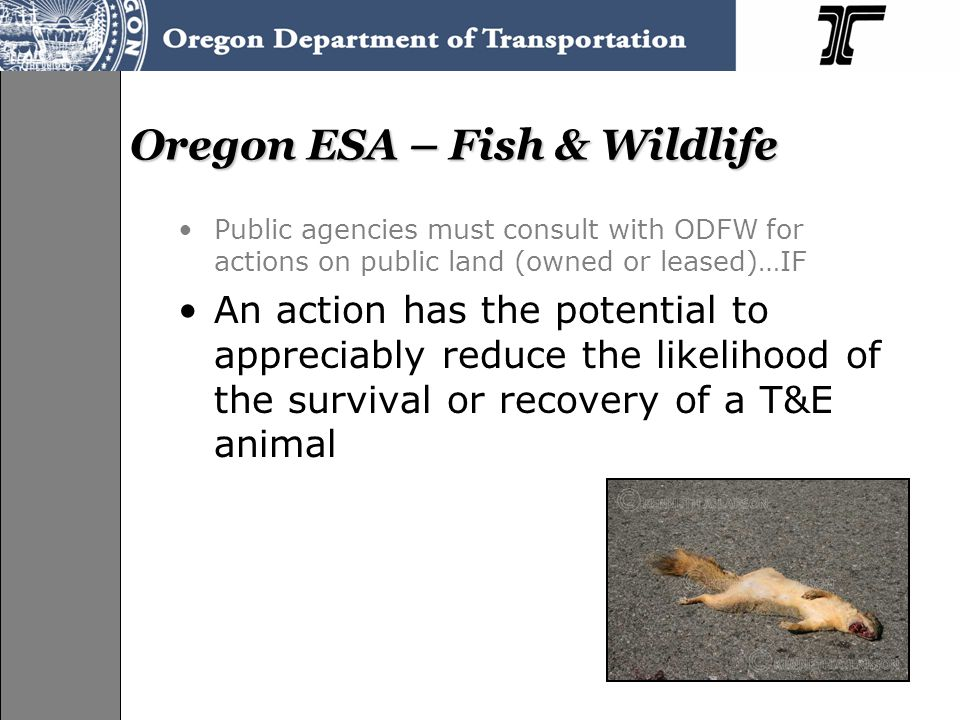 Oregon ESA – Fish & Wildlife Public agencies must consult with ODFW for actions on public land (owned or leased)…IF An action has the potential to app