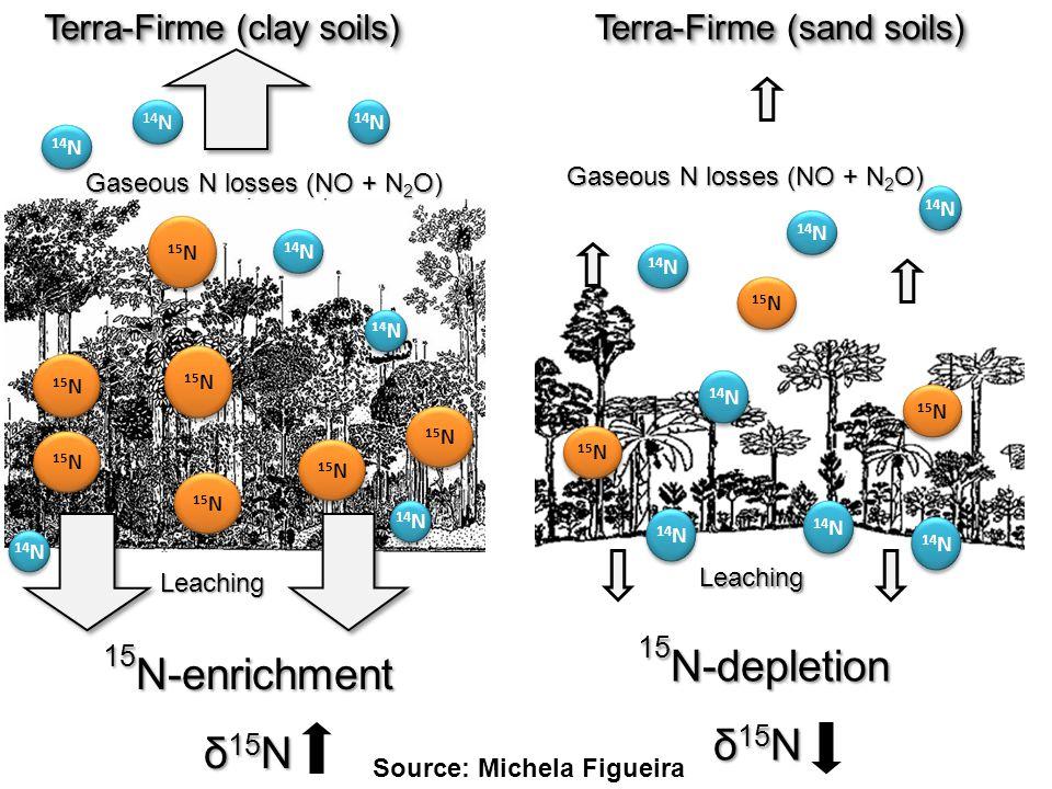 Terra-Firme (sand soils) 15 N 14 N 15 N-depletion 15 N-depletion δ 15 N 14 N 15 N Gaseous N losses (NO + N 2 O) 15 N 14 N 15 N-enrichment δ 15 N 15 N Leaching 14 N 15 N Gaseous N losses (NO + N 2 O) Leaching Terra-Firme (clay soils) 15 N 14 N Source: Michela Figueira