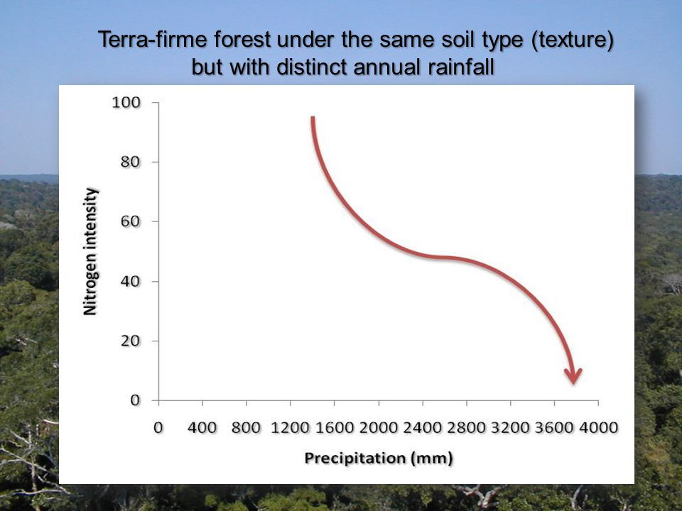 Terra-firme forest under the same soil type (texture) but with distinct annual rainfall but with distinct annual rainfall