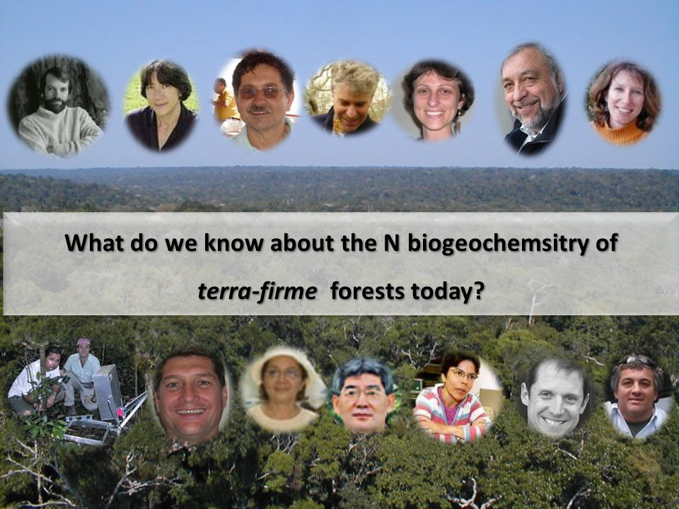 What do we know about the N biogeochemsitry of terra-firme forests today? What do we know about the N biogeochemsitry of terra-firme forests today?