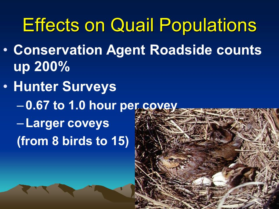 Effects on Quail Populations Conservation Agent Roadside counts up 200% Hunter Surveys –0.67 to 1.0 hour per covey –Larger coveys (from 8 birds to 15)