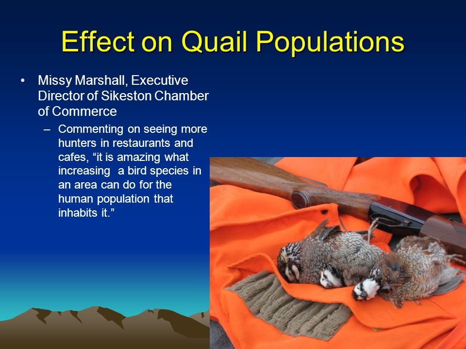 Effect on Quail Populations Missy Marshall, Executive Director of Sikeston Chamber of Commerce –Commenting on seeing more hunters in restaurants and cafes, it is amazing what increasing a bird species in an area can do for the human population that inhabits it.