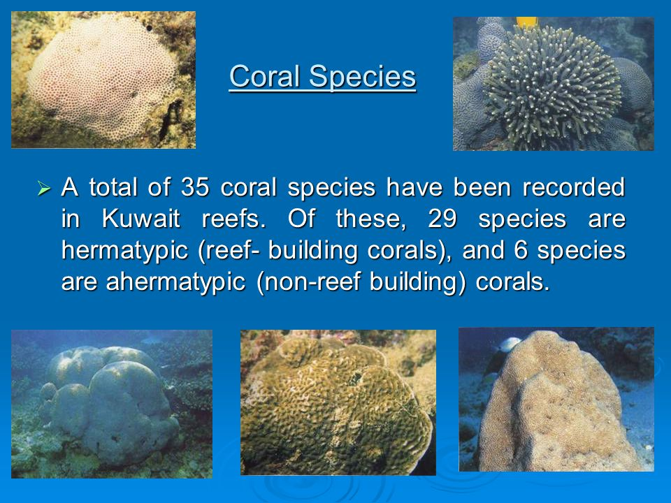 Coral Species  A total of 35 coral species have been recorded in Kuwait reefs. Of these, 29 species are hermatypic (reef- building corals), and 6 spe