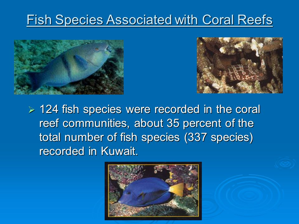  124 fish species were recorded in the coral reef communities, about 35 percent of the total number of fish species (337 species) recorded in Kuwait.