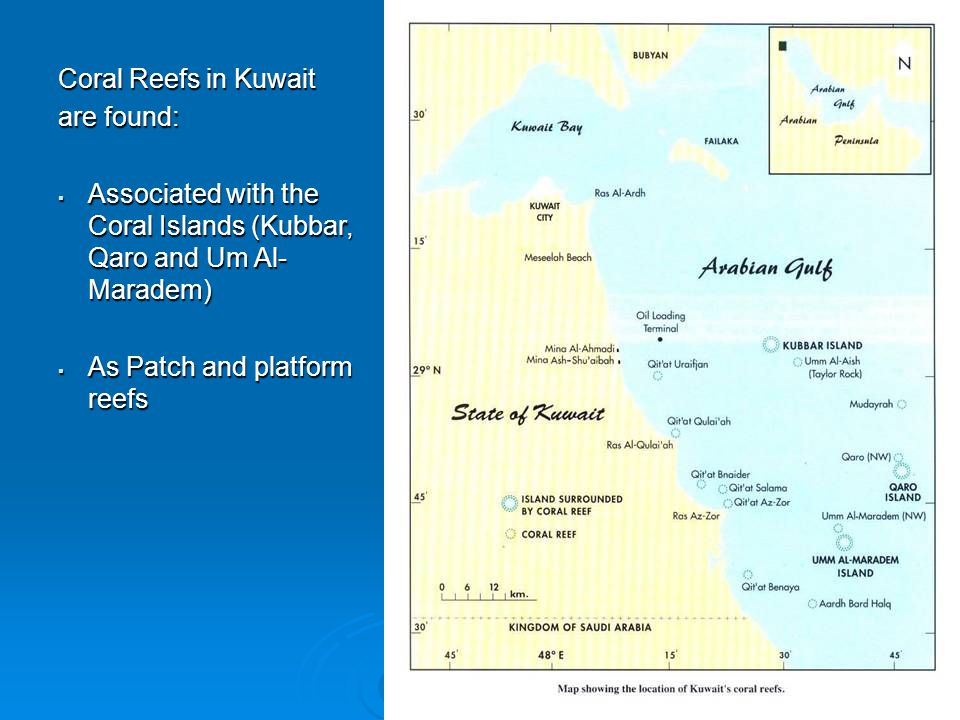 Coral Reefs in Kuwait are found:  Associated with the Coral Islands (Kubbar, Qaro and Um Al- Maradem)  As Patch and platform reefs