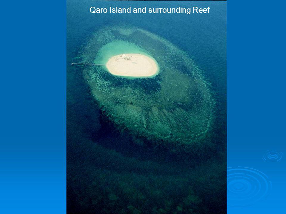 Qaro Island and surrounding Reef