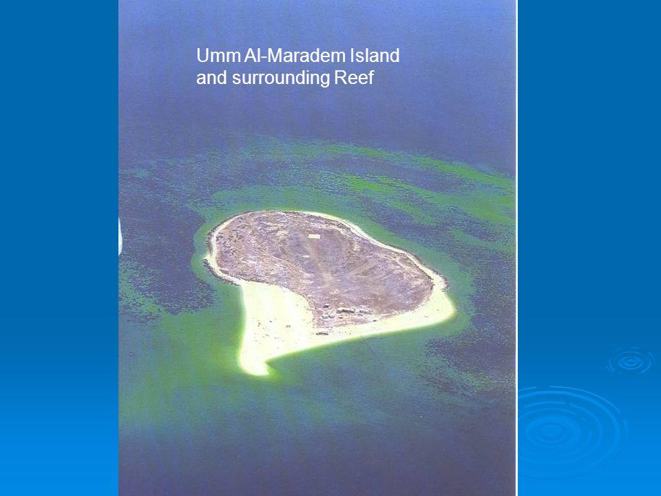 Umm Al-Maradem Island and surrounding Reef