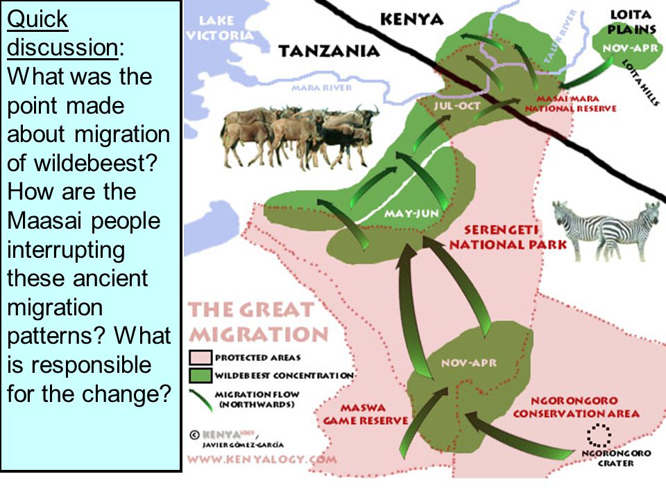 Quick discussion: What was the point made about migration of wildebeest.