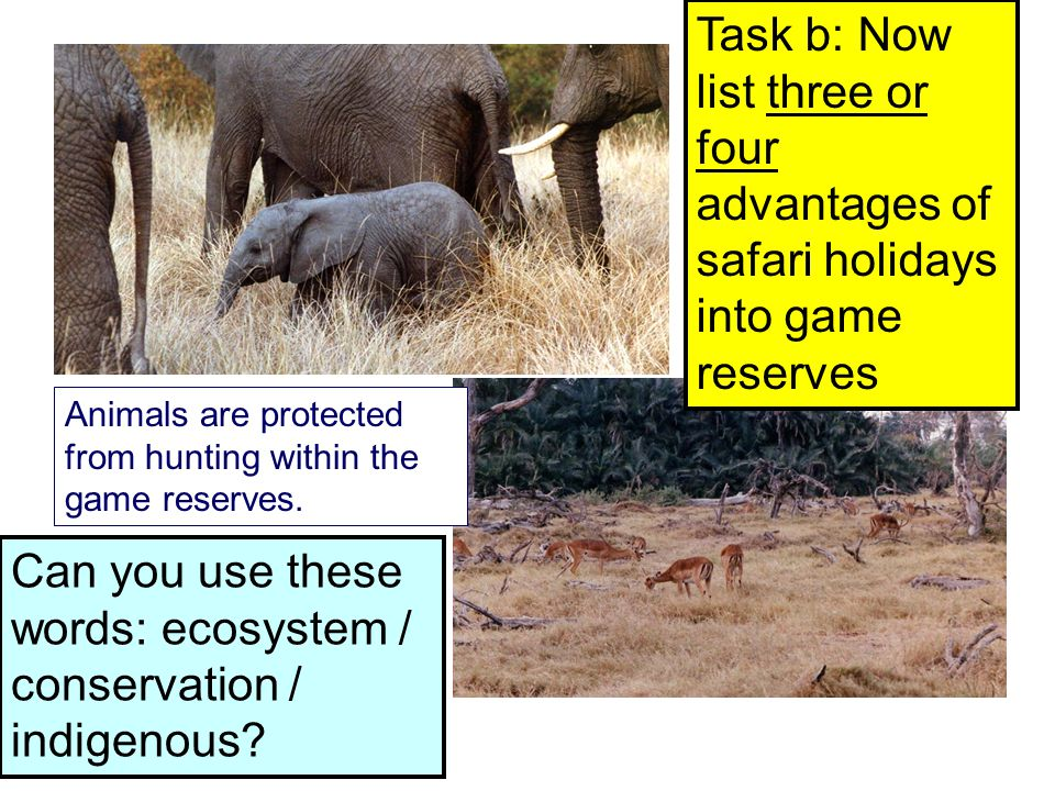 Animals are protected from hunting within the game reserves.