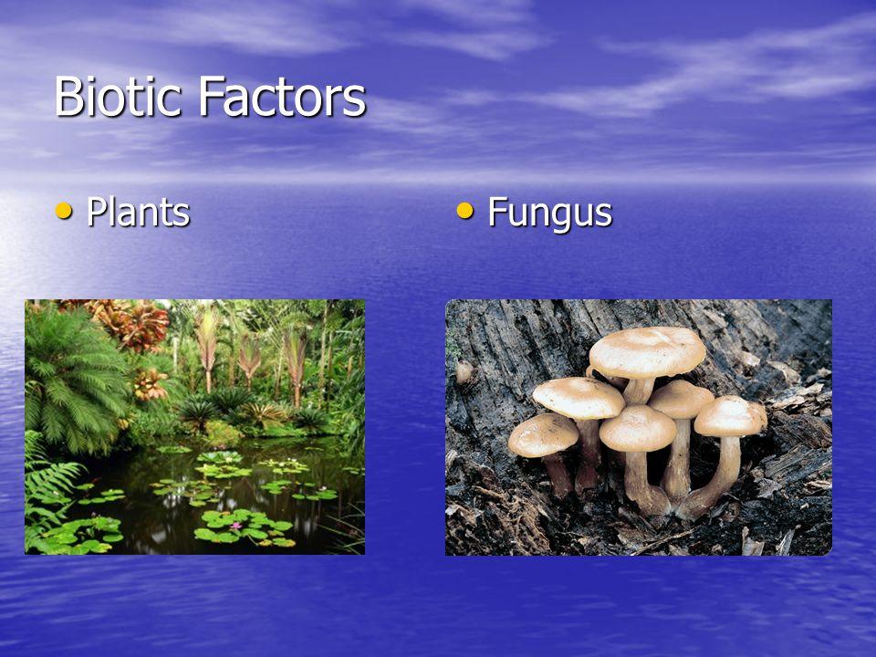 Biotic Factors Plants Plants Fungus Fungus