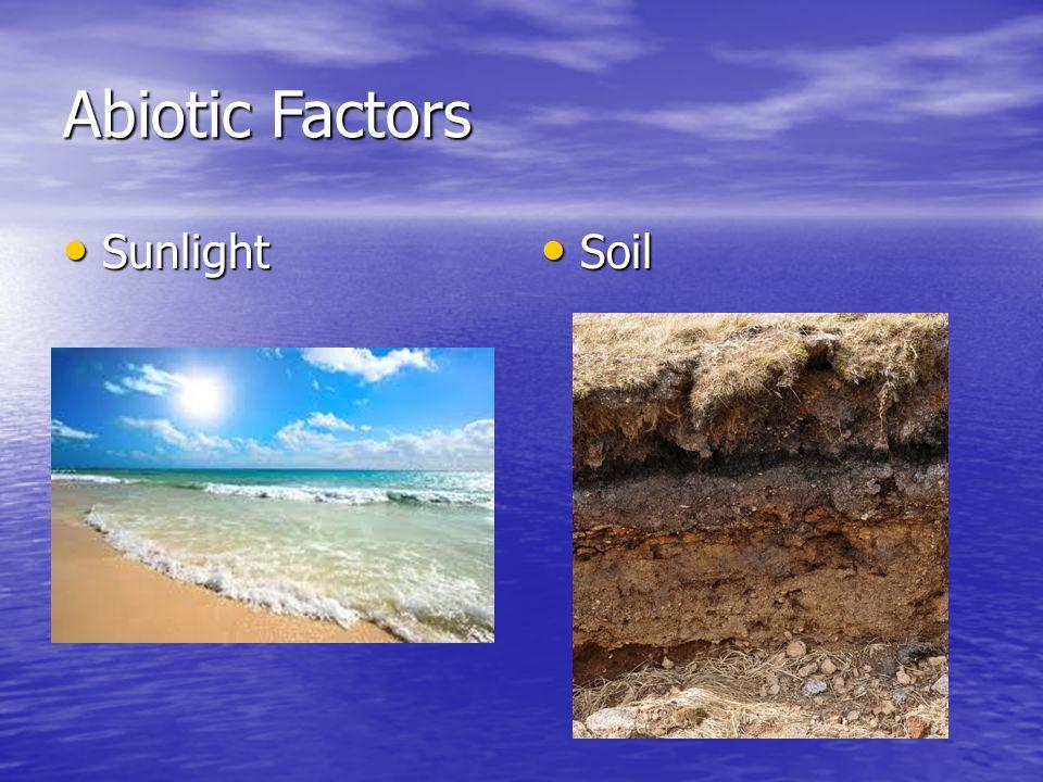 Abiotic Factors Sunlight Sunlight Soil Soil