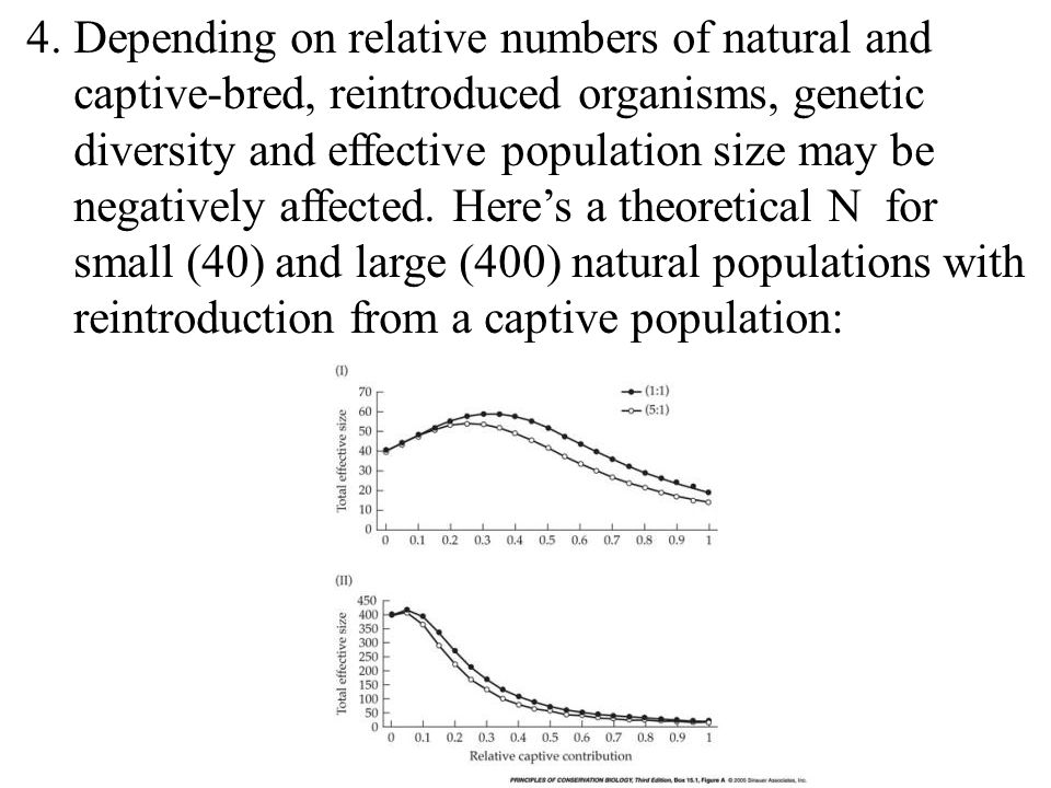 4. Depending on relative numbers of natural and captive-bred, reintroduced organisms, genetic diversity and effective population size may be negativel