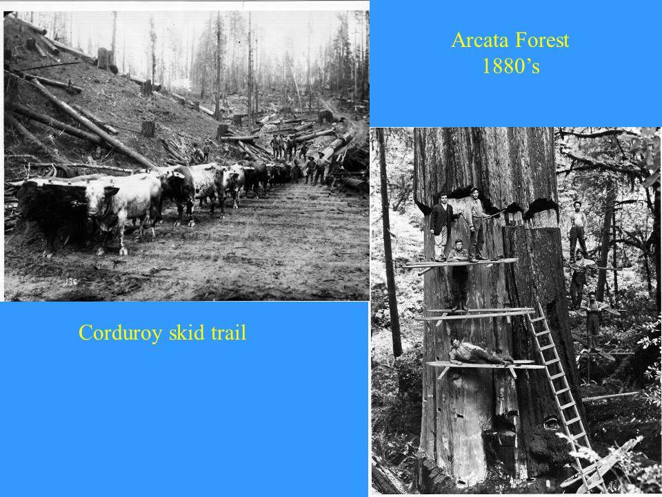 Arcata Forest 1880's Corduroy skid trail