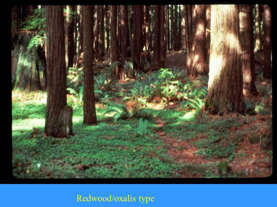 Redwood/oxalis type