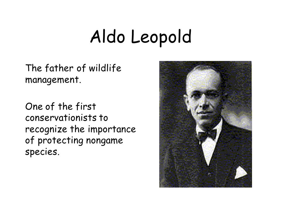 Aldo Leopold The father of wildlife management.