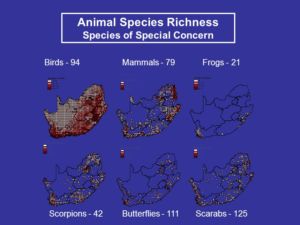 Animal Species Richness Species of Special Concern Birds - 94Mammals - 79Frogs - 21 Scorpions - 42Butterflies - 111Scarabs - 125