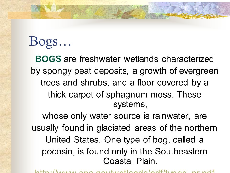 Bogs… BOGS are freshwater wetlands characterized by spongy peat deposits, a growth of evergreen trees and shrubs, and a floor covered by a thick carpet of sphagnum moss.
