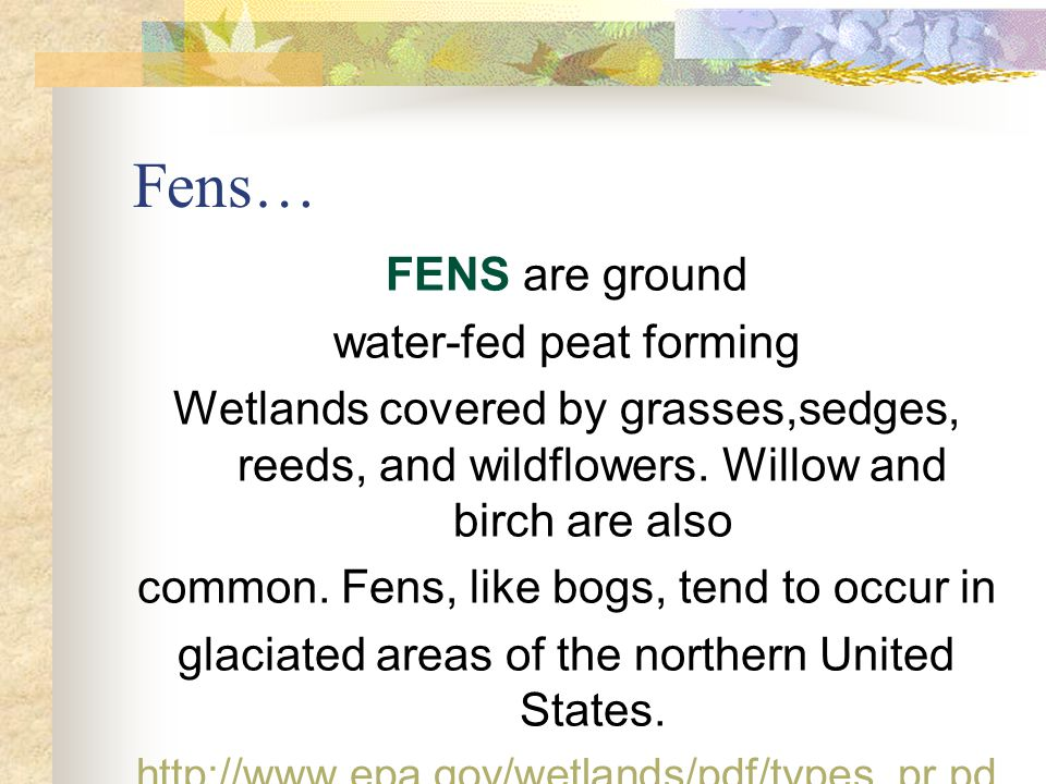 Fens… FENS are ground water-fed peat forming Wetlands covered by grasses,sedges, reeds, and wildflowers.