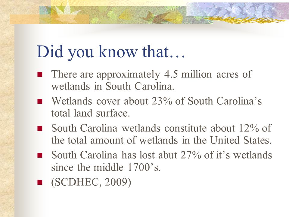 Did you know that… There are approximately 4.5 million acres of wetlands in South Carolina.