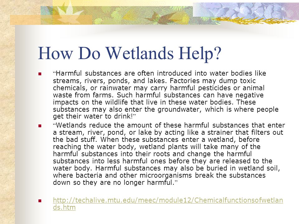 How Do Wetlands Help.