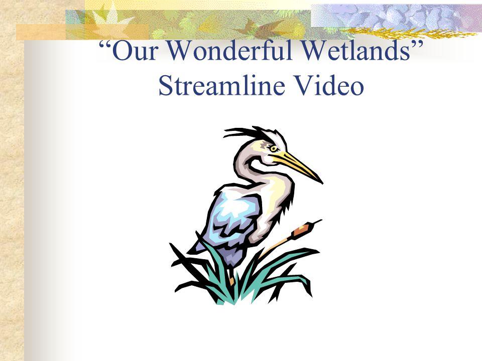 """Our Wonderful Wetlands"" Streamline Video"