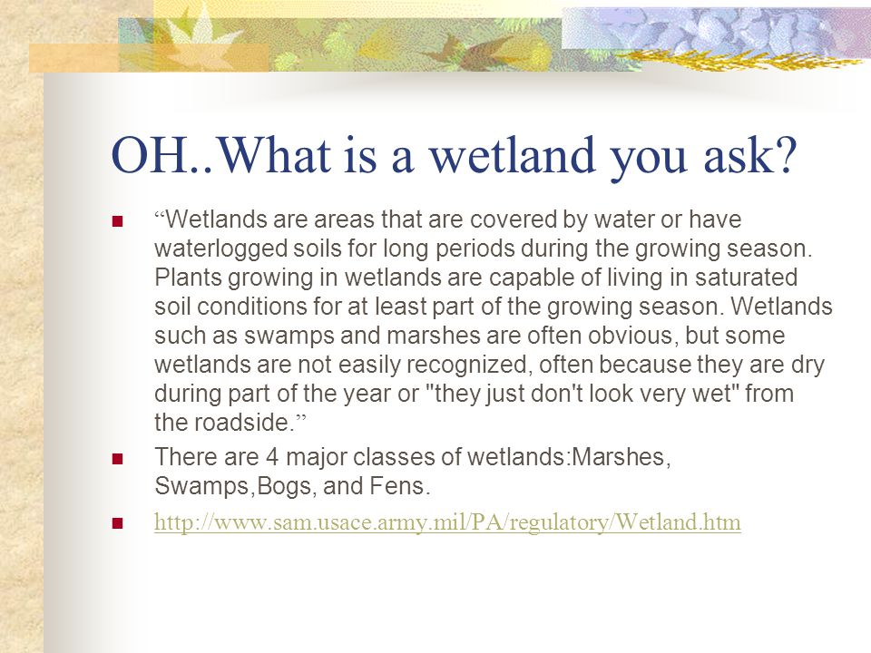 OH..What is a wetland you ask.