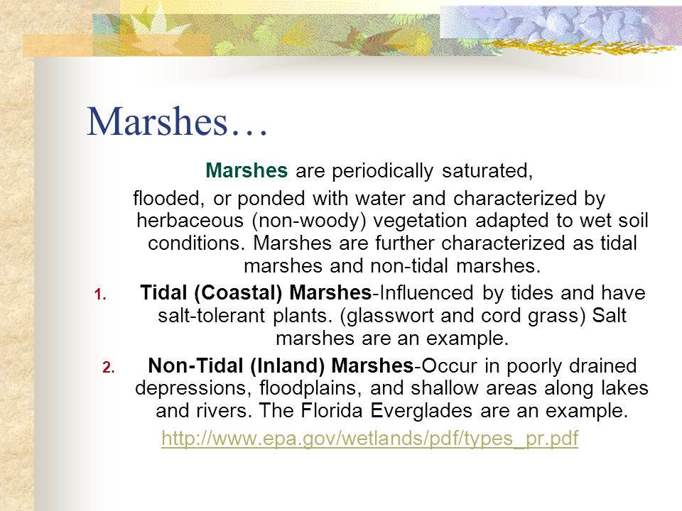 Marshes… Marshes are periodically saturated, flooded, or ponded with water and characterized by herbaceous (non-woody) vegetation adapted to wet soil conditions.