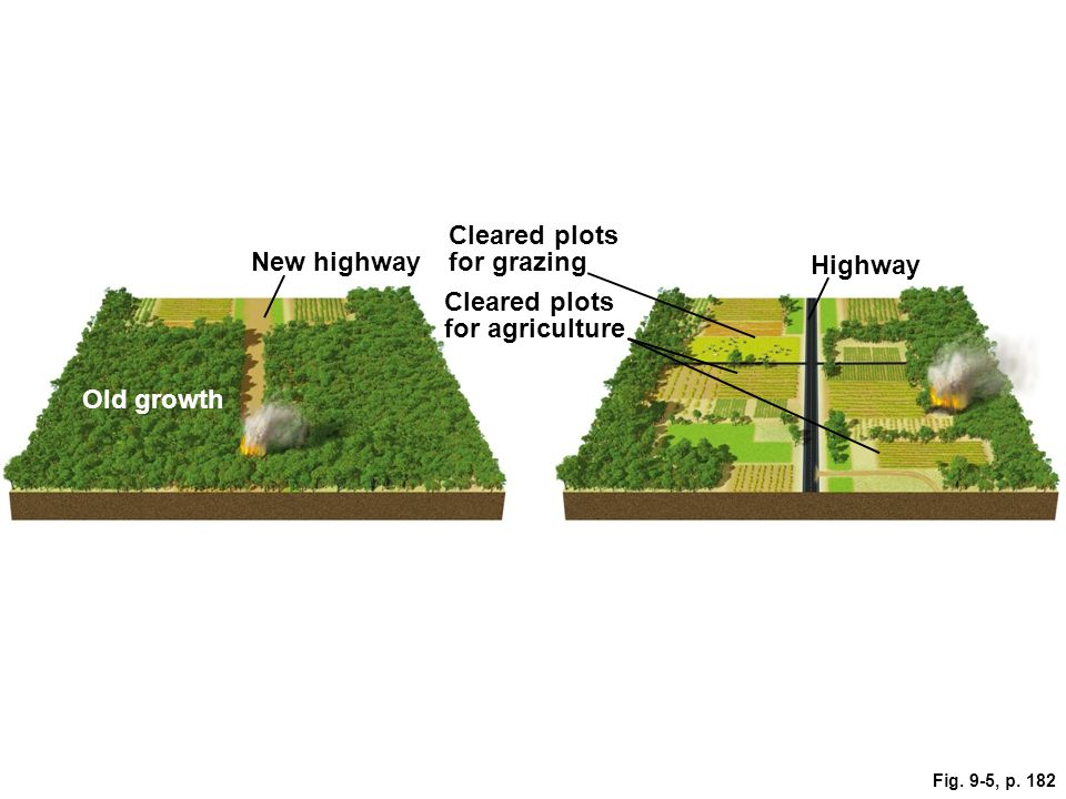 Cleared plots for agriculture New highway Old growth Highway Cleared plots for grazing Fig. 9-5, p. 182