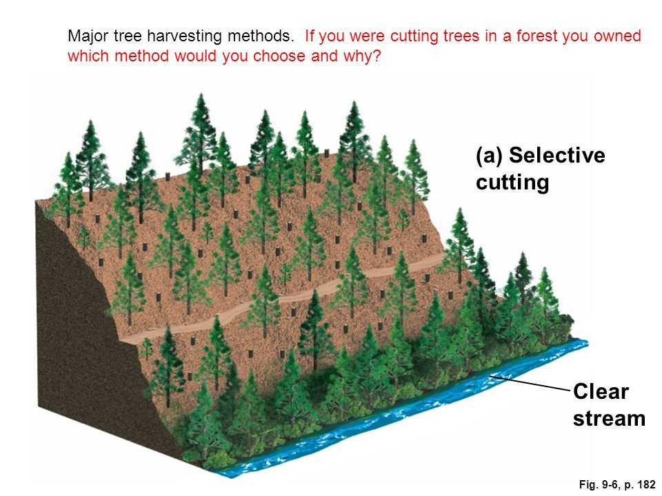 Clear stream (a) Selective cutting Fig. 9-6, p. 182 Major tree harvesting methods. If you were cutting trees in a forest you owned which method would