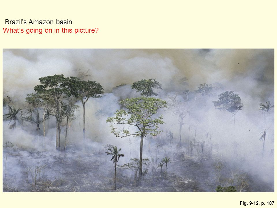 Fig. 9-12, p. 187 Brazil's Amazon basin What's going on in this picture?