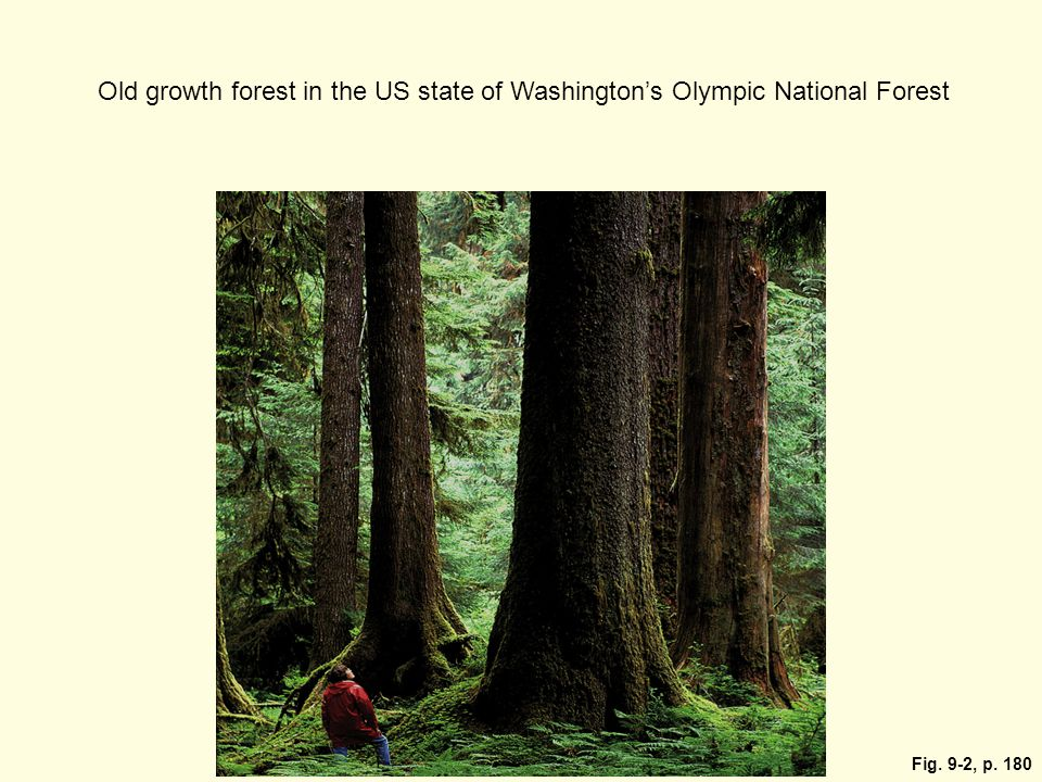Fig. 9-2, p. 180 Old growth forest in the US state of Washington's Olympic National Forest