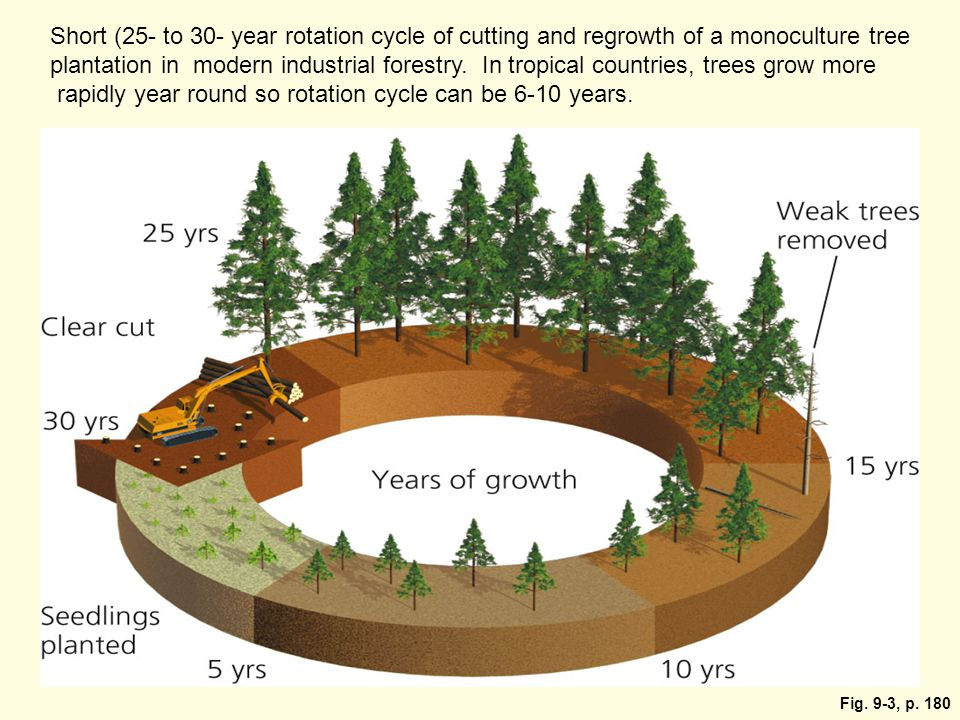 Fig. 9-3, p. 180 Short (25- to 30- year rotation cycle of cutting and regrowth of a monoculture tree plantation in modern industrial forestry. In trop