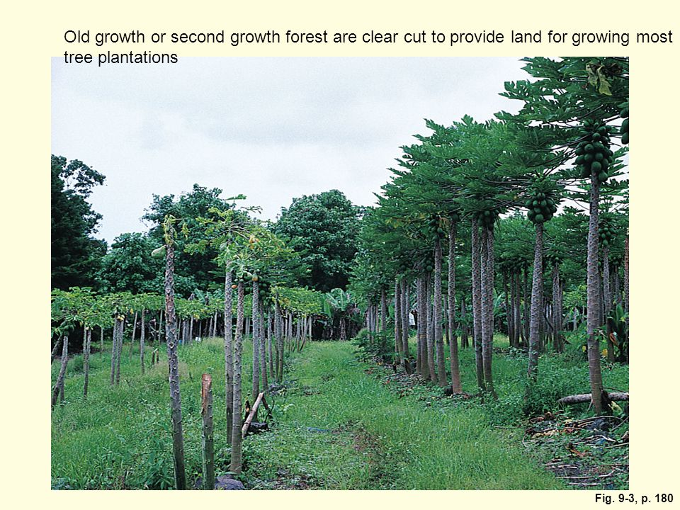 Fig. 9-3, p. 180 Old growth or second growth forest are clear cut to provide land for growing most tree plantations