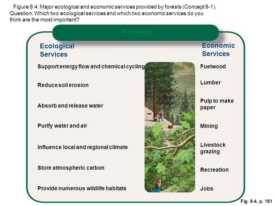 Fig. 9-4, p. 181 pFigure 9.4: Major ecological and economic services provided by forests (Concept 9-1). Question: Which two ecological services and wh