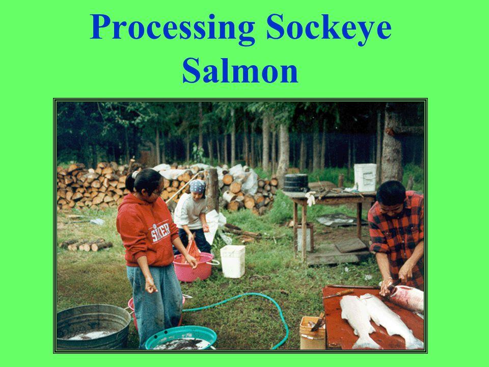 Processing Sockeye Salmon