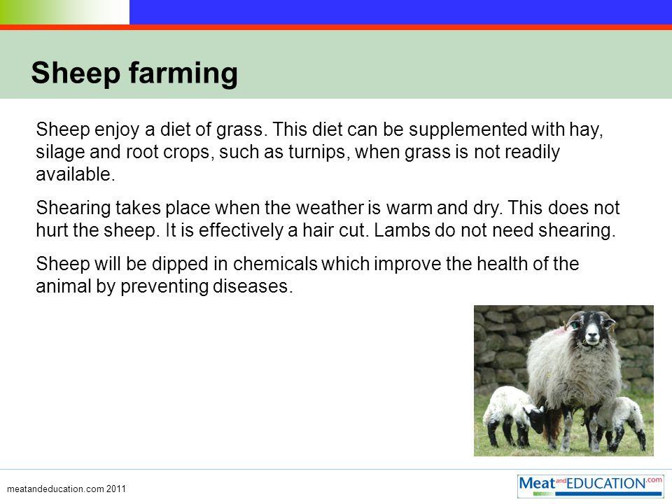 meatandeducation.com 2011 Sheep farming Sheep enjoy a diet of grass.