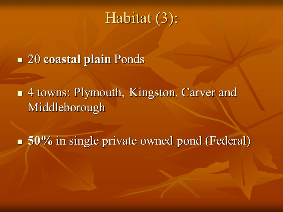 Habitat (3): 20 coastal plain Ponds 20 coastal plain Ponds 4 towns: Plymouth, Kingston, Carver and Middleborough 4 towns: Plymouth, Kingston, Carver and Middleborough 50% in single private owned pond (Federal) 50% in single private owned pond (Federal)